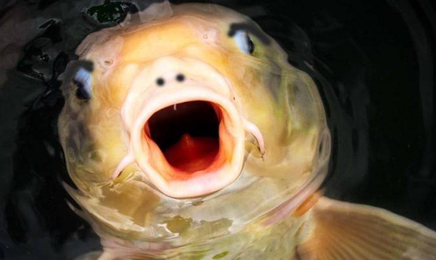 Se encuentra un pez con rostro humano en un lago de China